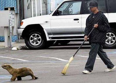 ANIMALES_EN_LA_CIUDAD
