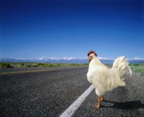 pollo dubitativo